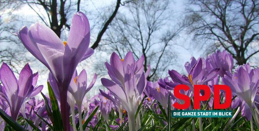 SPD-Logo mit Krokussen im Frühling. Hintergrundbild: ADD, pixabay.com, Ausschnitt 850x432