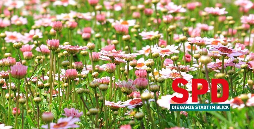 Blumenwiese mit SPD-Logo, Hintergrundbild von S. Hermann & F. Richter, pixel2013, auf Pixabay