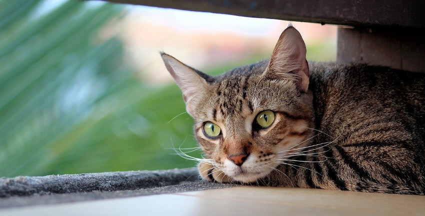 Katze, Foto: Charles Leslie/Pixabay